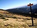 Modry dul - panoramio.jpg