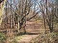 Moleskin Woods - geograph.org.uk - 252145.jpg