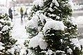 Monreal - first snowfall 2011 (6392694217).jpg