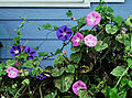 MorningGlories-Tonsofem.jpg