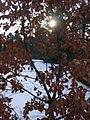 Morton Arboretum Winter 2005 13.JPG