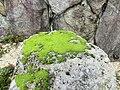 Moss004.jpg