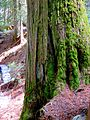 Mount Revelstoke National Park 04.jpg
