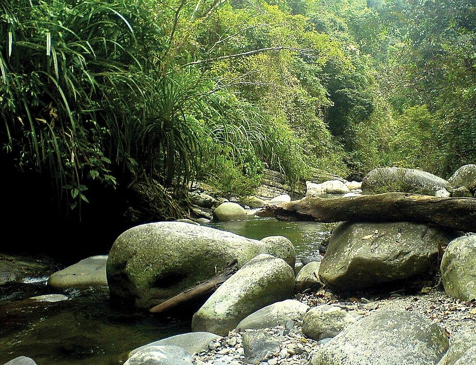 Mountain creek, Taranaban River tributary, Palawan.jpeg