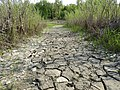 Muddy riverbank in St. Norbert Provincial Park.jpg