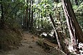 Muir Woods National Monument 2010 13.JPG
