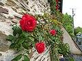 Mur de roses - panoramio.jpg