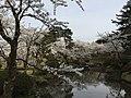 Muramatsu Park, Niigata pref., April 2018.jpg