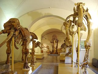 natural history museum in Florence, Italy