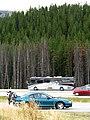 Mustang at rest (1291604521).jpg