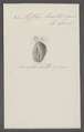 Mytilus lineatus - - Print - Iconographia Zoologica - Special Collections University of Amsterdam - UBAINV0274 076 01 0031.tif