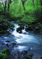 NRCSOR02012 - Oregon (5873)(NRCS Photo Gallery).tif