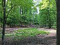 NSG-Grumsiner-Forst-Redernswalde.jpg