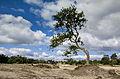 Nationaalpark Loonse en Drunense Duinen.jpg