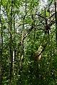 Nationalpark Donau-Auen Lobau Fasangarten Mai 2016 02.jpg
