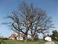 Naturdenkmal 'Drei Eichen' - panoramio.jpg