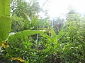 Natureza viva - panoramio.jpg