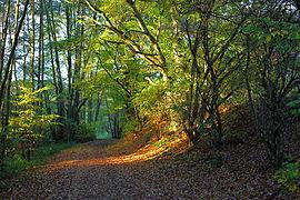 Naturschutzgebiet Krebsbachtal bei Ruppertshain.JPG