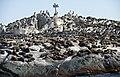 New 0443 Seal Island JF.jpg