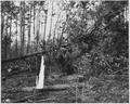Newberry County, South Carolina. Land Cultivation. (No detailed description given.) - NARA - 522748.tif