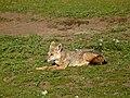 Ngorongoro (14) (14148790115).jpg