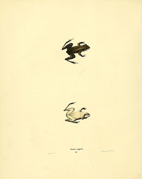 File:North American herpetology, or, A description of the reptiles inhabiting the United States (6075909005).jpg