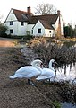 Now with added swans - geograph.org.uk - 660344.jpg