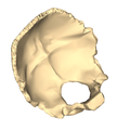 Occipital bone close-up suerperior2.png