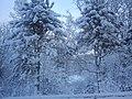Okolice Borkowo zimą - panoramio.jpg