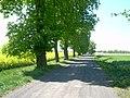 Okolice Sobótki - panoramio - wlkp.jpg