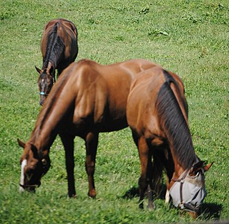 Old Friends Equine - Geldings share pastures at Old Friends, becoming close friends