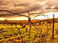 Old farm fence, twisted wires, in Cottle's Bridge near Melbourne - panoramio.jpg