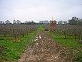 Orchard near Barons Grange - geograph.org.uk - 300476.jpg