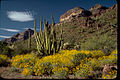 Organ Pipe Cactus National Monument ORPI4653.jpg