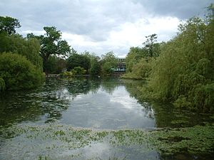 Orpington - The pond at Priory Gardens is the source of the River Cray.