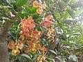 Orquídea da Cantareira.jpg