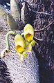 Orquidea.jpg
