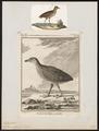 Ortygometra crex - 1700-1880 - Print - Iconographia Zoologica - Special Collections University of Amsterdam - UBA01 IZ17500081.tif