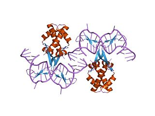 Bacterial DNA binding protein