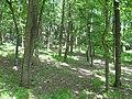 Padurea satului primavara - panoramio.jpg