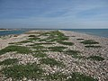 Pagham Harbour mouth - geograph.org.uk - 1458230.jpg