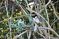 Pair of birds in in Keoladeo Ghana National Park.jpg