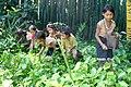 Pak-Oh children pick greens.jpg