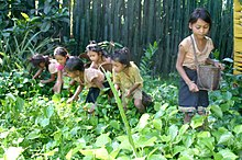 Pak-Oh children pick greens.jpg