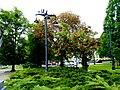 Park im Jana Kochanowskiego - panoramio (7).jpg