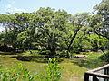 Parque Ecológico Humedal El Samán, Parque de la Salud (3). Cartago, Valle, Colombia.JPG