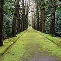 Parque Terra Nostra, Furnas, S. Miguel, Açores,Portugal - panoramio (23).jpg