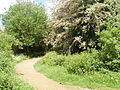 Path into Stockley Country Park - geograph.org.uk - 809697.jpg