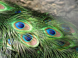 Structural coloration Colour in living creatures caused by interference effects
