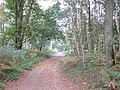 Peddars Way - geograph.org.uk - 261549.jpg